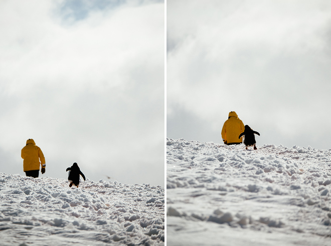 penguin hikes with us in antarctica